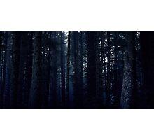 Duskwood Forest Photographic Print