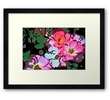 Rose 197 Framed Print
