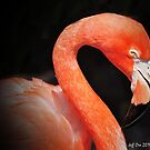 Pink Flamingo (Black Background) by Jeff Ore