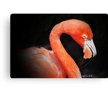 Pink Flamingo (Black Background) Canvas Print