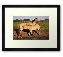 Konik Horse with Foal Framed Print