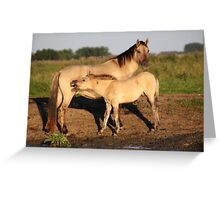 Konik Horse with Foal Greeting Card