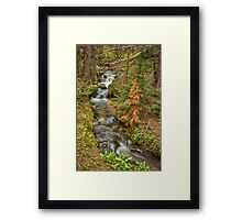 Rusty The Pine Tree and The Flowing Stream Framed Print