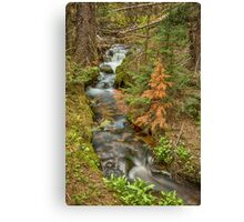 Rusty The Pine Tree and The Flowing Stream Canvas Print