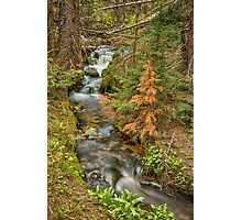 Rusty The Pine Tree and The Flowing Stream Photographic Print