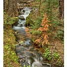 Rusty The Pine Tree and The Flowing Stream by Bo Insogna