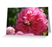 Honey Bee Collecting Pollen On A Pink Rose Greeting Card