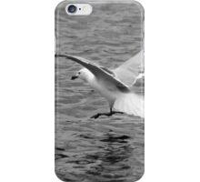 Herring Gull Landing on Water iPhone Case/Skin