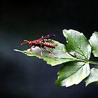 WASP by TomBaumker
