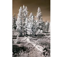 Bryce Canyon Infrared Trees Photographic Print