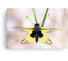 Out of the blur Canvas Print