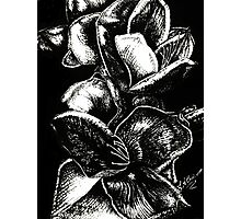 In Bloom - Silver Photographic Print
