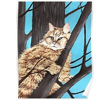 Cat on a Tree Poster