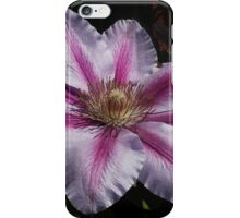 Clematis at Noonday iPhone Case/Skin