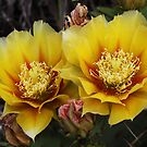 Twin Blooms by Paul Sturdivant