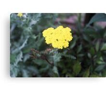 Simple Yellow Flower Canvas Print