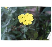 Simple Yellow Flower Poster