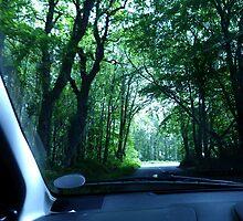 Back In Dorset UK by lynn carter