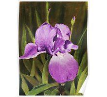 Single Iris Poster