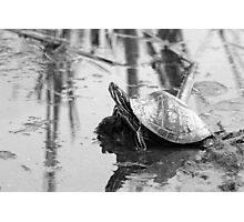 Painted Turtle Reflection Photographic Print