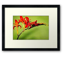 Red Trumpet Lilies Framed Print