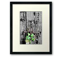 Ivy on the old barn door Framed Print