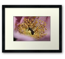 Mystery Guest Framed Print