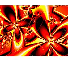 Flaming Red Flowers Photographic Print