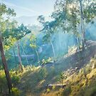 Morning Light, Howqua Hills, Mansfield, Victoria, Australia by Michael Boniwell