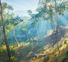 Morning Light, Howqua Hills, Mansfield, Victoria, Australia by Michael Boniwell