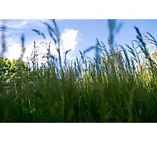 """Regent Park's """"Jungle"""" Photographic Print"""
