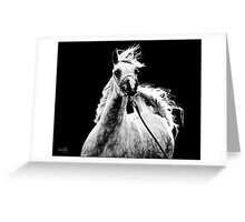 Dancing Grey Filly Greeting Card