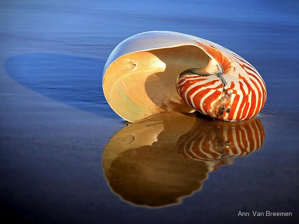 Washed Up by Ann  Van Breemen