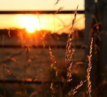 Sunset in Somerset by davrberts