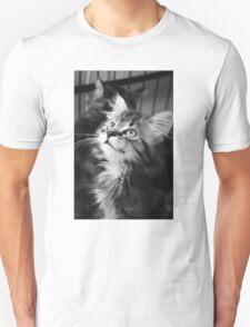Kitten looking up (Clothing Products) Unisex T-Shirt