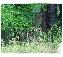 Doe In Hiding Poster
