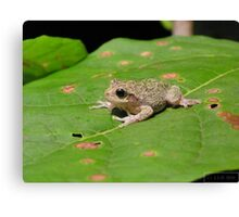 Peeping Frog Canvas Print