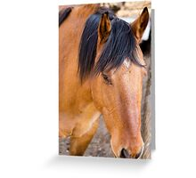 62 red Greeting Card