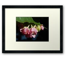 pink under the green  Framed Print