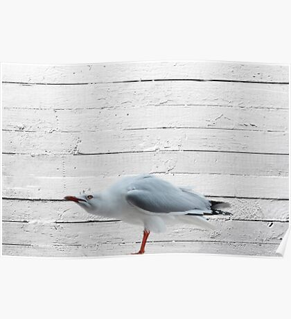 angry seagull Poster