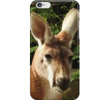 Red Kangaroo iPhone Case/Skin