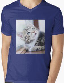 Tabby Kitten Mens V-Neck T-Shirt