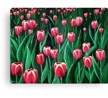 Pink Tulip Field Canvas Print