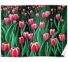 Pink Tulip Field Poster