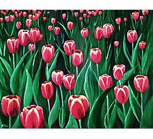Pink Tulip Field Photographic Print