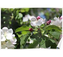 Apple Blossoms III  2014 Poster
