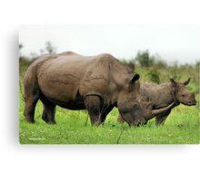 MOTHER & CALF - White Rhinoceros - Ceratotherium sumum -WIT RENOSTER Canvas Print