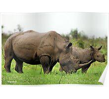 MOTHER & CALF - White Rhinoceros - Ceratotherium sumum -WIT RENOSTER Poster