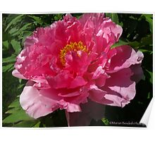 Rejoice with Peonies Poster
