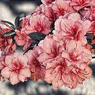 Old Fashion Azalea by Sharon Woerner
